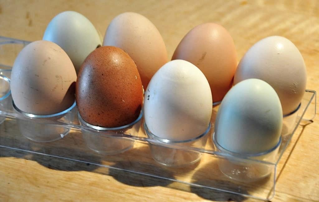 Grüne Eier